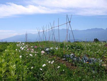チュトワ野菜づくり農園
